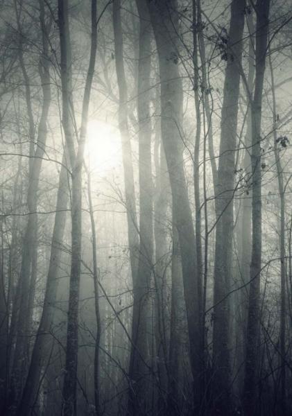 https://www.latiendadelaspegatinas.com/uploads/fotomurales-decorativos-blanco-y-negro-FM-byn-0001-niebla-en-el-bosque-BASE_bbd33.jpg