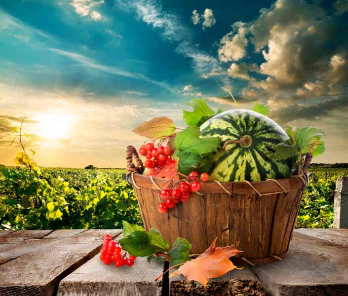 https://www.latiendadelaspegatinas.com/uploads/fotomurales-decorativos-comida-y-bebida-FM-com-0004-cesta-de-frutas-BASE_d3a3f.jpg