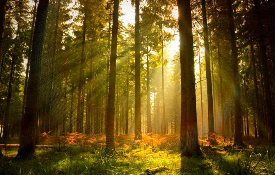 https://www.latiendadelaspegatinas.com/uploads/fotomurales-decorativos-naturaleza-FM-nat-0002-en-el-corazon-del-bosque-BASE_061cd.jpg