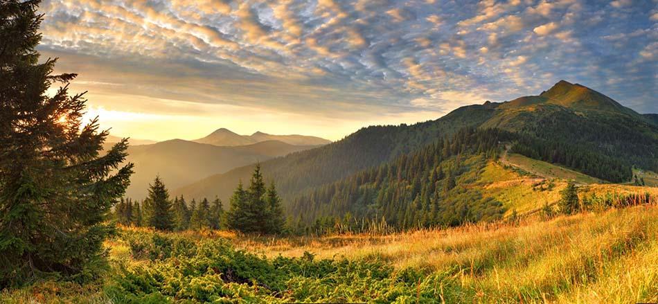 https://www.latiendadelaspegatinas.com/uploads/fotomurales-decorativos-paisajes-FM-pai-0002-atardecer-en-el-bosque-BASE_39312.jpg